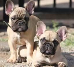 Bulldog/troco