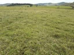 Bahia 700 hectares
