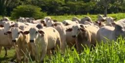 Vendo fazenda em Tocantins (Leia anúncio)