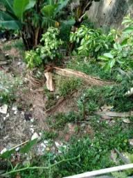 Vendo  pés de abacate encerrados interessados  contato *