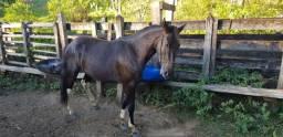 Vendo Potro Mangalarga / Cavalo