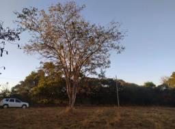 Chacaras planas em Goianira (35km Terminal Padre Pelágio)