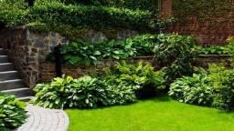 Limpeza de Jardins - Preços promocionais para OLX.