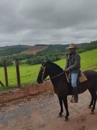 Égua mm sem registro égua pra cavalgada