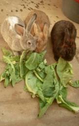 Vendo três coelhos