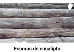 Escoras de eucalipto