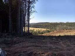 Sitio 22 hectares