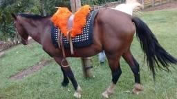 Cavalo