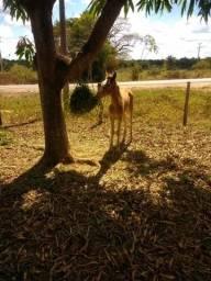 Rede de feno de feno e capim para cavalos