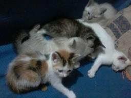 Gatos para doar
