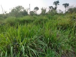 Fazenda 564 hectares
