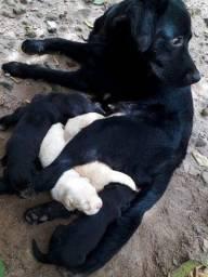 4 filhotes