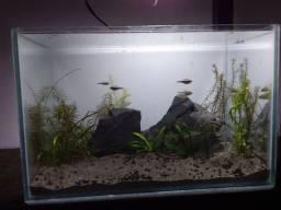 Norte Fish