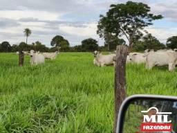 Fazenda Extra de Cultura - Plana (Araguaçu-TO)