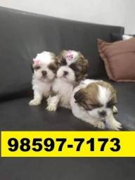 Canil Filhotes Cães Belíssimos BH Shihtzu Lhasa Yorkshire Poodle Maltês Basset Lhasa