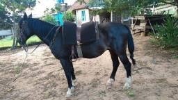 Vendo cavalo de laço