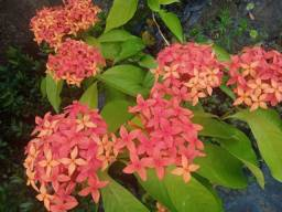 Flores/Plantas (Promoção Imperdível)