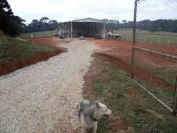 Terreno de 5000m² com barracão industrial e casa