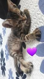 Doação de 5 gatinhos