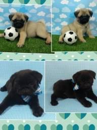 Pug macho disponível na cor preta e Abricot