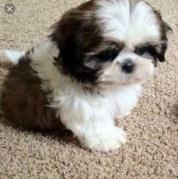 Quero Adotar um cachorro ? filhote