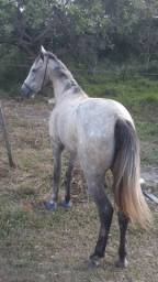 Vende-se egua de estera
