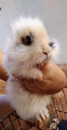 Mini Lion Head