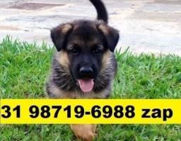 Canil Cães Filhotes Perfeitos BH Pastor Boxer Labrador Akita Golden Rottweiler
