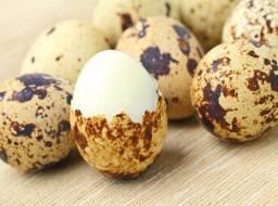 Pintinho e ovos de codornas gigante