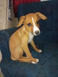 Cães de 90 dias,desverminados para doação.