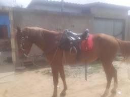 Vendo cavalo mangalarga de picado
