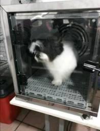 Só hoje maquina secadora de cachorro