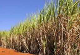 Sítio com plantação de cana, 14 alqueires, região de Ribeirão Preto