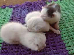 Doação de gatinhos ( daqui 20 dias)