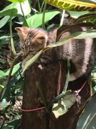 Lindo gatinho filhote 2 meses