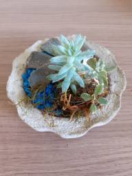 Vaso terrarios suculentas naturais