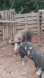 Vende-se um Barrão e uma Porca