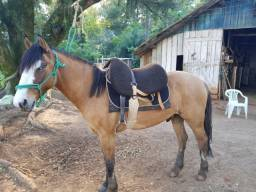 Cavalo Gateado Salgo dos dois olhos