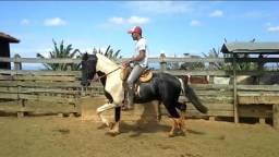 cavalo marchador pampa de preto