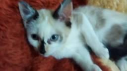 Doação de gatos Brasília