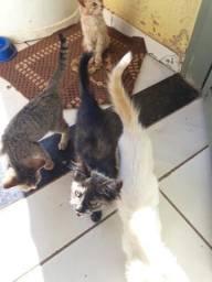 Gatos da doação