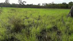 Fazenda sensacional no Pantanal do MT 5,899,09 HÁ