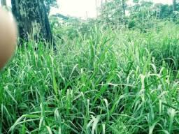 Fazenda 630 hectares