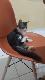 Linda gatinha para adoção responsável.