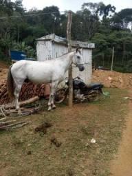 Cavalo de charrete