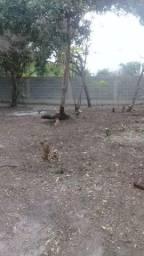 Terreno Caiçara Arraial do Cabo
