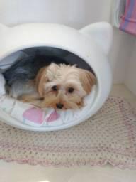 Casinha toca para cães ou gatos Passo Fundo RS