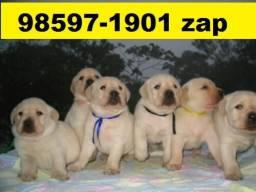 Canil Lindos Filhotes BH Cães Labrador Golden Akita Pastor Rottweiler Dálmata Boxer
