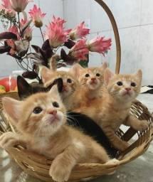 Gatos para doação com triagem!