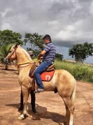 Vende-se Cavalo e égua